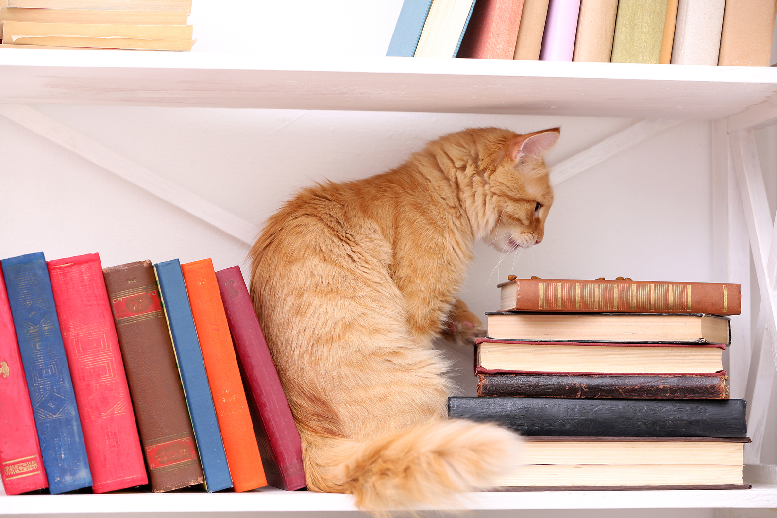 Cute little cat on shelf with books on light background